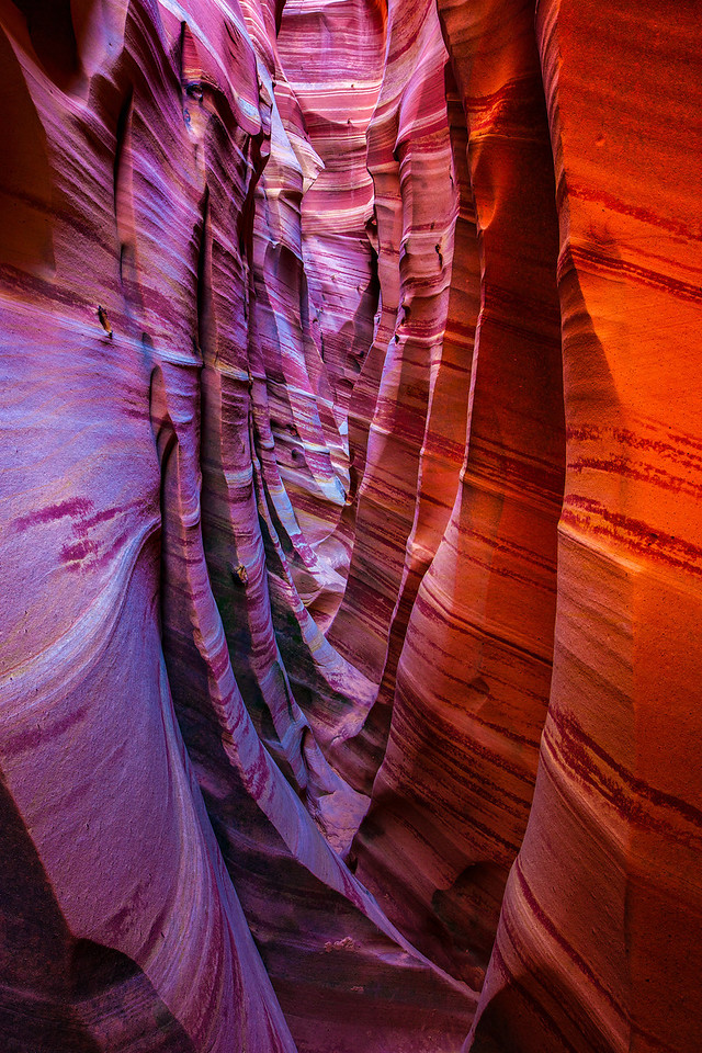 """Zebra Slot Canyon Upstream View"""