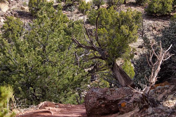 Escalante Petrified Forest State Park, Utah