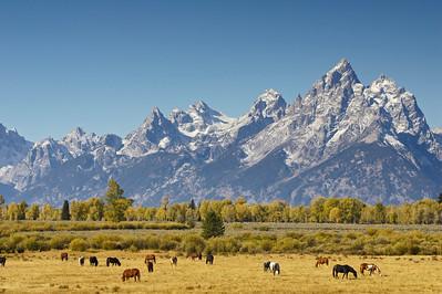 Teton Range and horse pasture