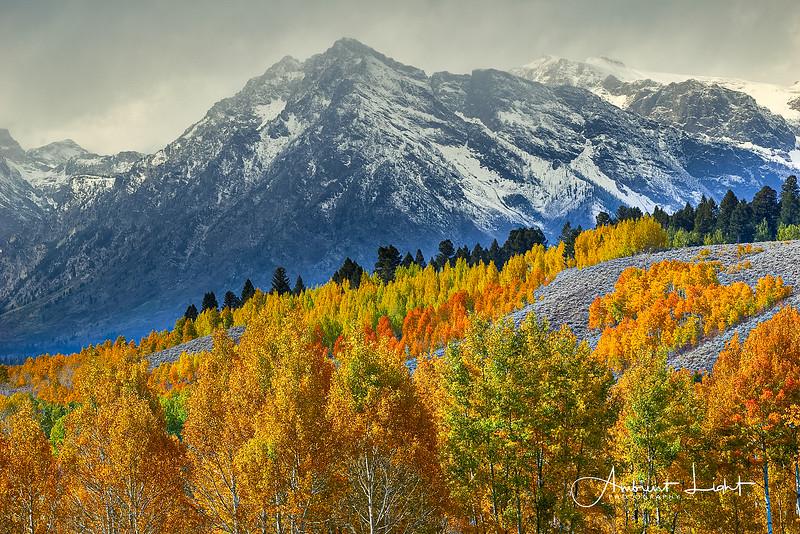 Fall color along Gros Ventre Road