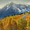 Fall color along Gros Ventre Road