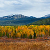 Fall color on road to Two Ocean Lake