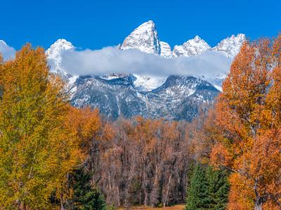 Autumn Aspen Alley: Grand Tetons National Park Fine Art Landscape Photography
