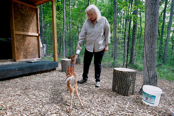 LEELANAU WILDLIFE CARE