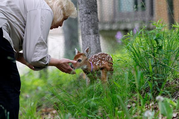 LEELANAU WILDLIFE CARE
