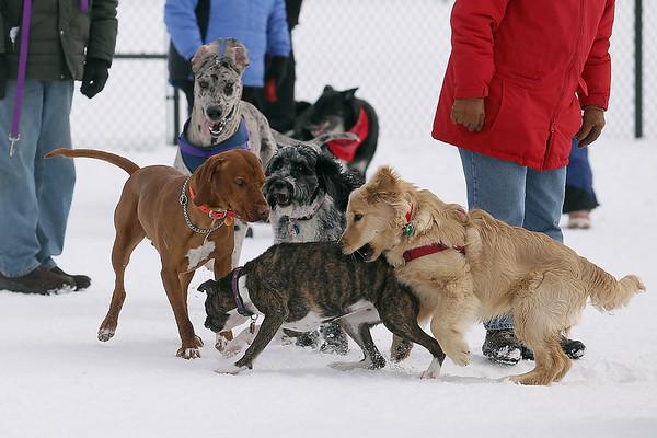WINTER DOG WALK