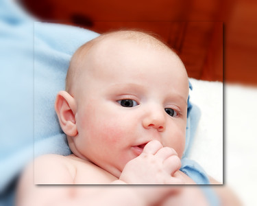 12 Brennan 11 Weeks Old (10x8)