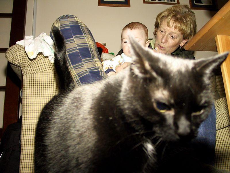 Whooo !  Whooooooooo!  A black cat in the picture....
