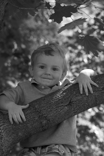 Coop in Tree and Jodi's bw to print