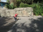 Running at the zoo