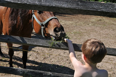 Feeding Horse at Dattco Picnic June 19, 2010