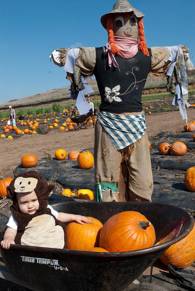 Pumpkin-7