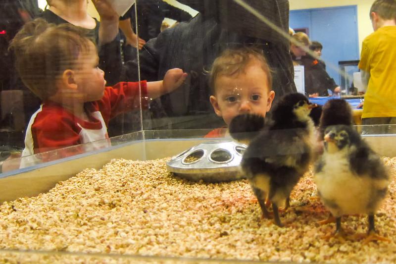 Kohl's Childrens Museum