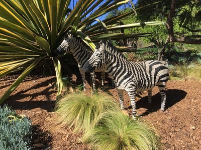 Hiding Zebras.
