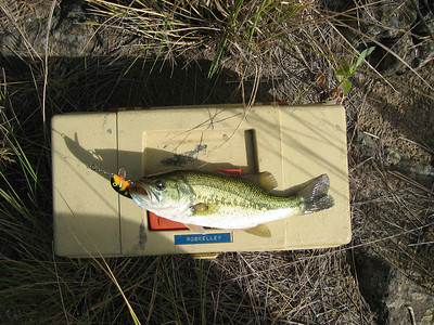 More Fishing 7-12-2006
