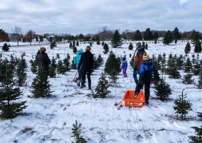 2017 Christmas Tree Farm
