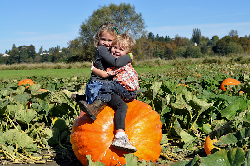 Pumpkin Patch Plus