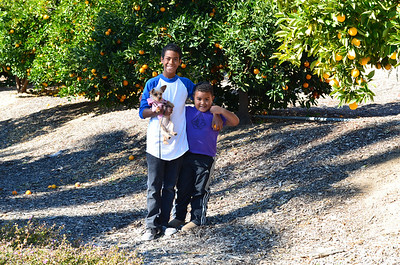 In one of the many orange groves in the Ranch.