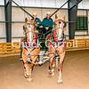 Draft Horse Show Grange Fair- 8-26-2016 -  Chuck Carroll