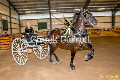 Draft Horse Show - Grange Fair - Thursday -  Chuck Carroll