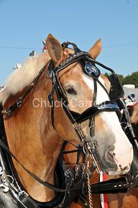 Grange Fair 2010 --  Friday Draft Horse Show  --  Centre Hall Pennsylvania  - Six Horse Hitch