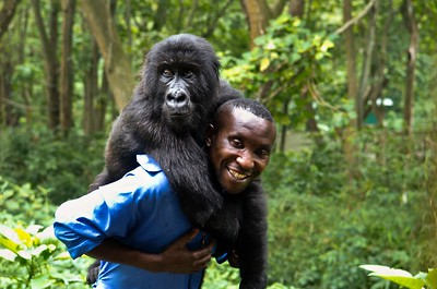Andre and one of his Orphan Gorillas