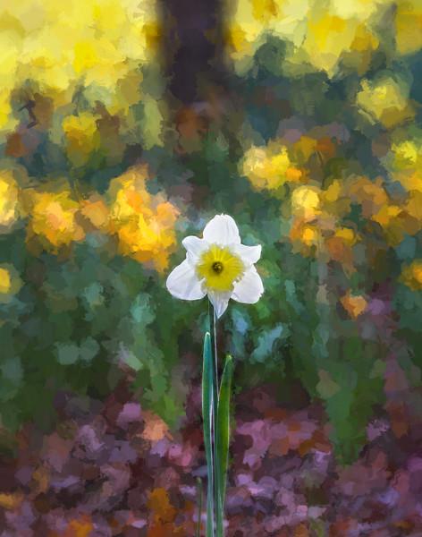 Monet Daffodil