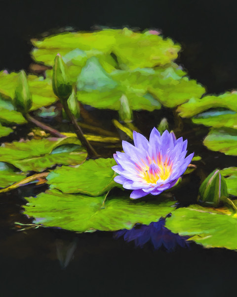 Water Lily - Monet Impression