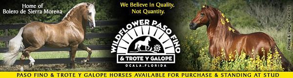wildflower-banner2