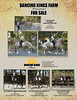 Dancing Kings-8 5x11 Sales Horse Flyer-Take2-RGB