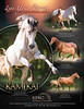 Epic Andalusians Flyer