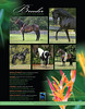 PFHW Jan 2011 issue - full page ad