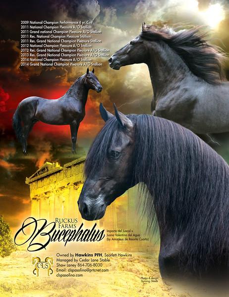 PFHWDec2014-Ruckus Farms BucephalusHAWKINS-HR
