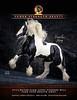 Pearlie King-The Vanner-8 25x10 75-2020-RGB