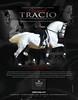 PRE Andalusian stallion - Tracio