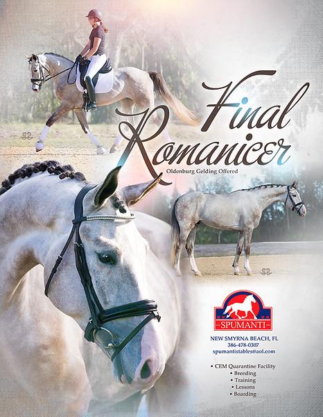 horse ad Oldenburg dressage gelding graphic design