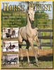 Horse Digest - Jan 2011 - Front Cover Lusitano Foal