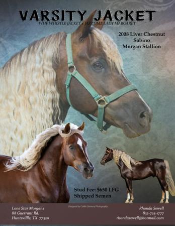 Stallion Ads