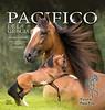 Vinyl Stall Banner -  Pinto Paso Fino Stallion
