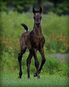 Ali Foal6