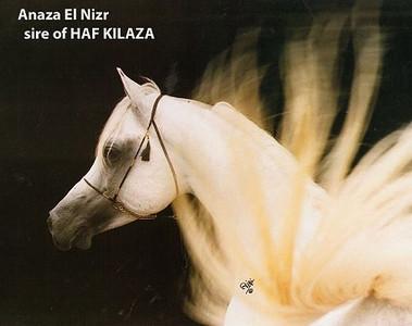 Anaza El Nizr6