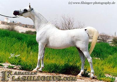 Sundar Alisayyah