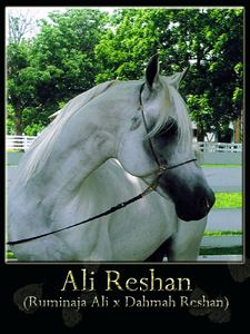 Ali Reshan 2