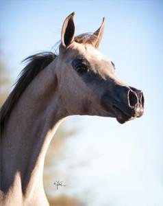 Ali Foal3  Princess RuminaBVA