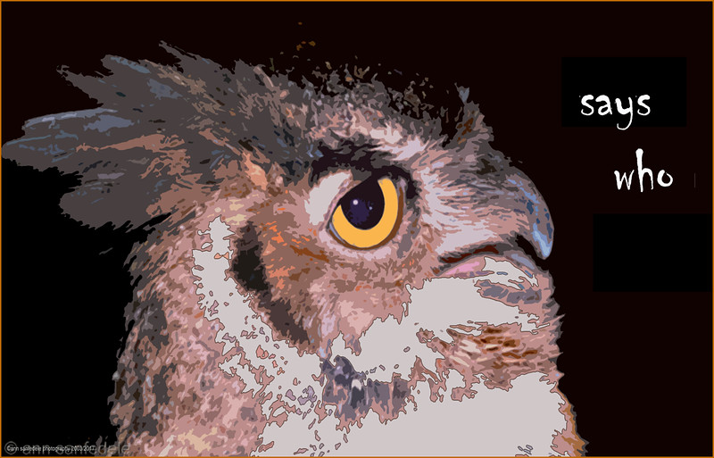"""""""says Who""""  great horned owl"""