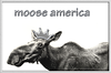 Here she is - Moose America <p> http://www.cafepress.com/annsanstuff/3623382