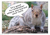 another version of Squirrel wisdom.  I took this off my cafepress store page as it is less family friendly than most of my things,<br /> if your mind runs that way :-). but I think I'll submit it to the cafepress market place.