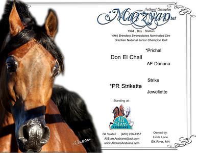 Stallion card.