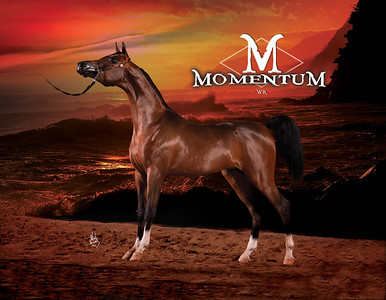 MomenteumSC1