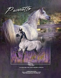Pavorotto-StallionCards2